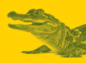 Later, Alligator, Staffing Industry Review, November 2013